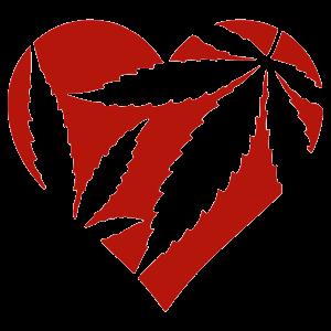 cannabis heart